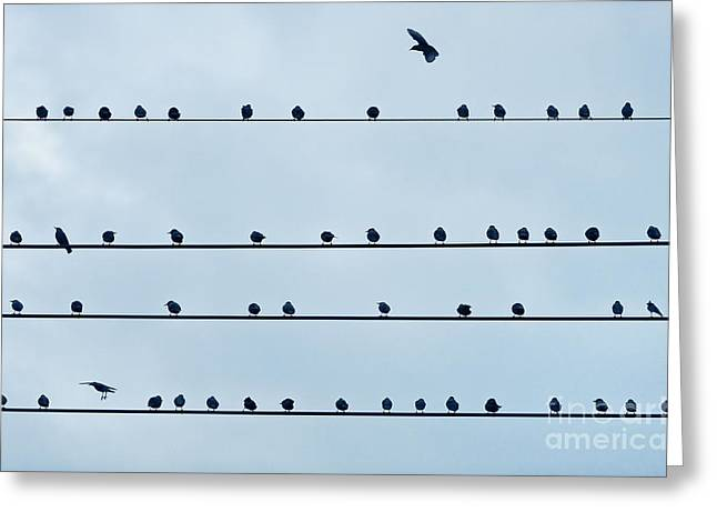 Bird On A Wire Greeting Cards - Birds on a Wire Greeting Card by John Greim