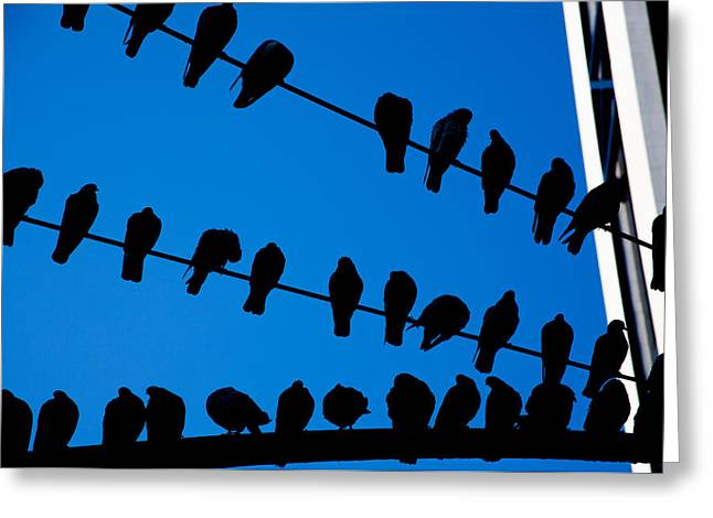 Pigeon In Park Greeting Cards - Birds on a Wire Greeting Card by Karol  Livote