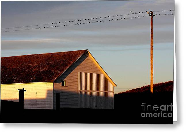 Pierced Greeting Cards - Birds on a Wire Greeting Card by Wingsdomain Art and Photography