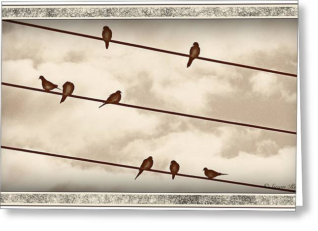 Birds On Wires Greeting Card by Susan Kinney