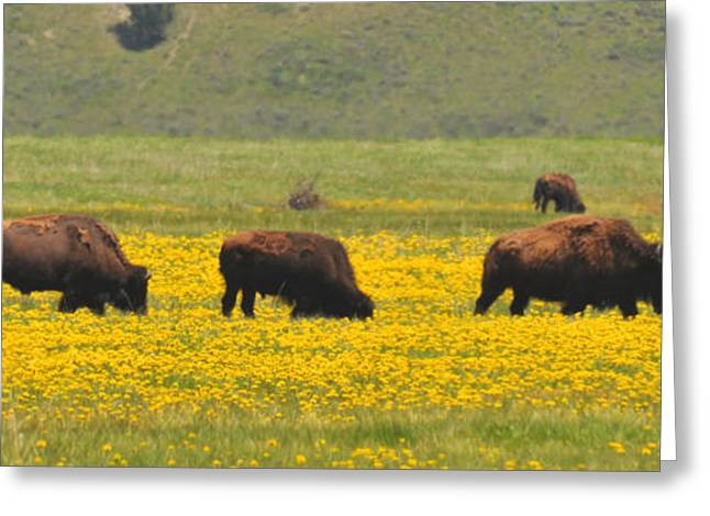 Bison Herd Greeting Card by Alan Lenk