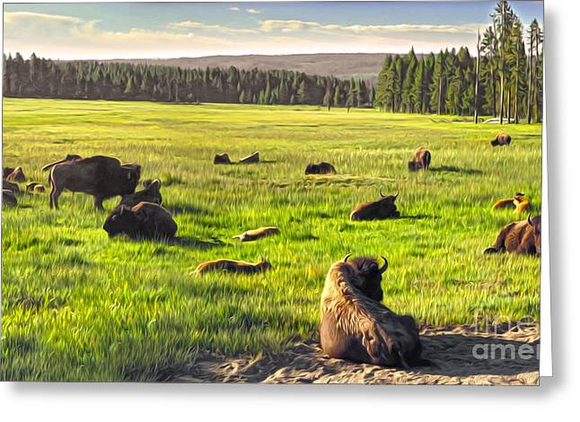 Bison Herd In Yellowstone Greeting Card by Gregory Dyer