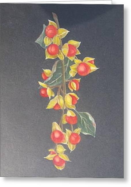 Bittersweet Drawings Greeting Cards - Bittersweet Greeting Card by Fran Haas