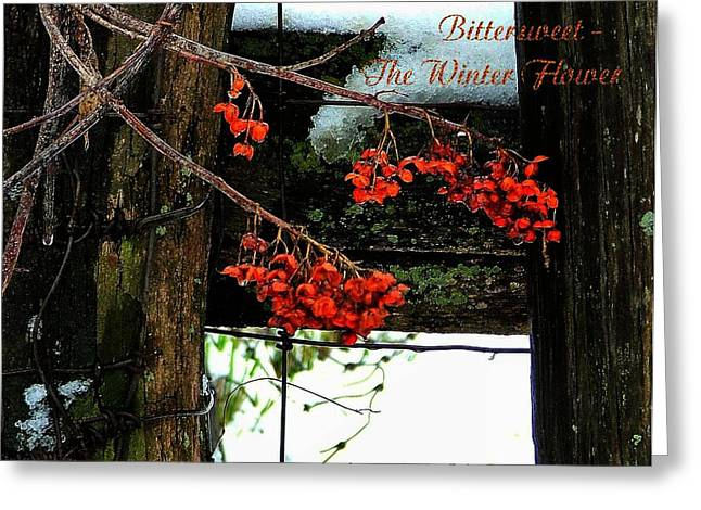 Amish Community Greeting Cards - Bittersweet The Winter Flower Greeting Card by Julie Dant
