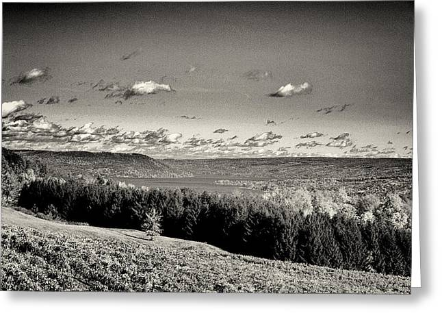 Keuka Greeting Cards - Black and White Above the Vines  Greeting Card by Joshua House