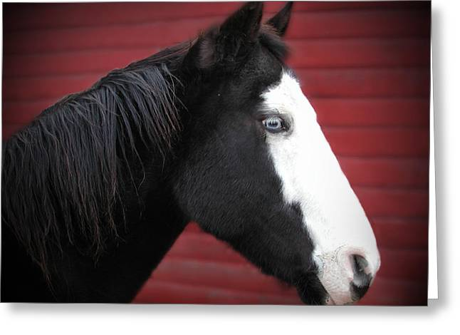 Quarter Horses Greeting Cards - Black and White Blue Eyed Horse Greeting Card by Laurie With