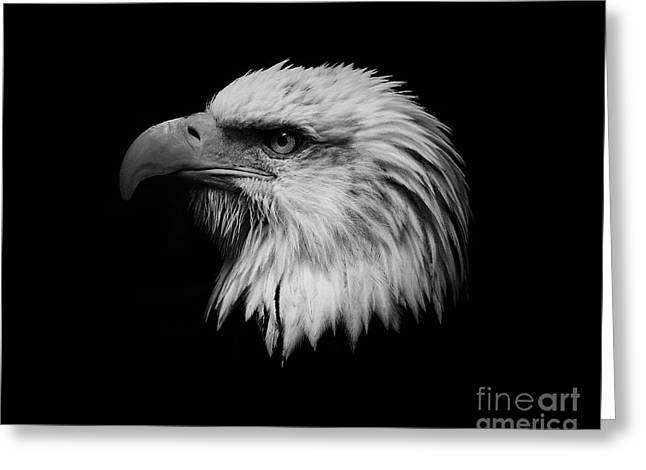 Independance Greeting Cards - Black and White Eagle Greeting Card by Steve McKinzie