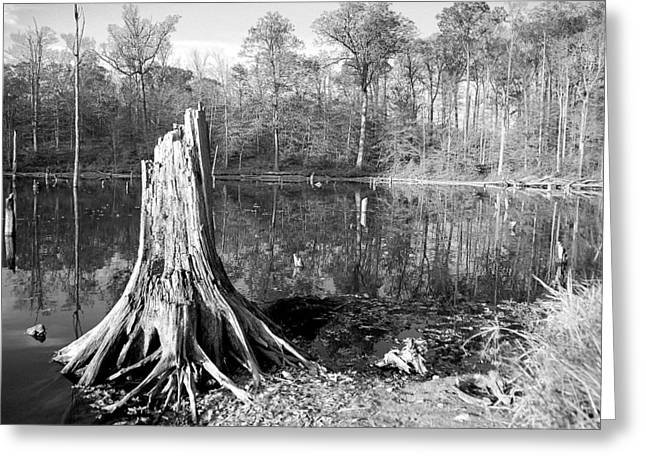 Reflection Pyrography Greeting Cards - Black and White Fall Alum Creek Greeting Card by Monica Lewis