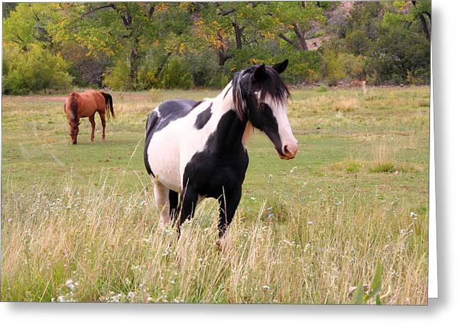Myeress Greeting Cards - Black and White Horse Greeting Card by Joe Myeress