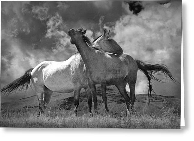 Hooved Mammal Greeting Cards - Black and White Photograph of Montana Horses Greeting Card by Randall Nyhof