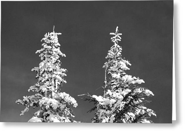 Black And White Snow Covered Pines Greeting Card by Twenty Two North Photography
