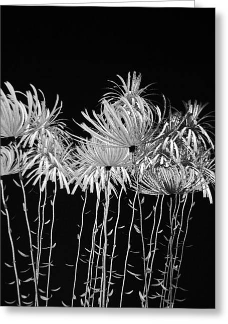Black And White Stems Greeting Card by James Mancini Heath