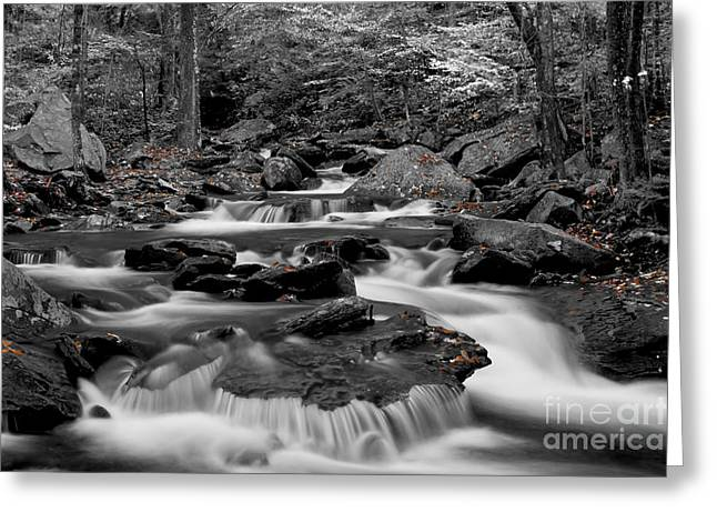Water Flowing Greeting Cards - Black and White stream at Ricketts Glen Greeting Card by Robert Wirth