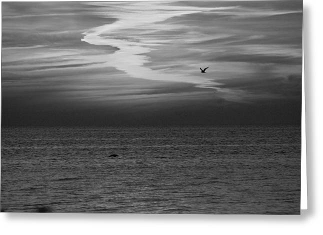 Black and White Sunset Greeting Card by Aimee L Maher Photography and Art
