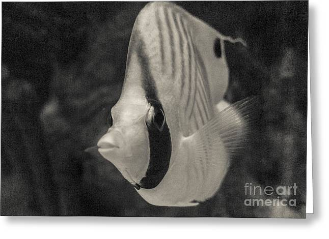 Decorative Fish Greeting Cards - Black and White Tropical Fish Greeting Card by Darcy Michaelchuk