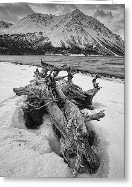 Black And White Version Of Kathleen Greeting Card by Robert Postma
