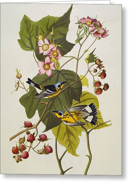 1851 Greeting Cards - Black And Yellow Warbler Greeting Card by John James Audubon