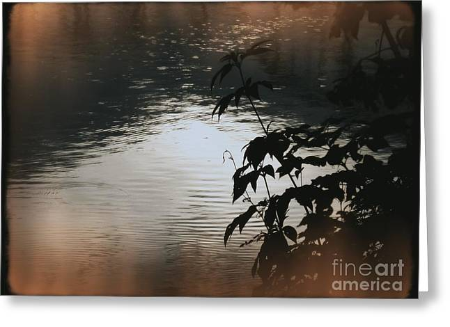 Black Bamboo Greeting Card by Angela Wright