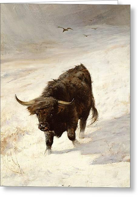 Grazing Snow Paintings Greeting Cards - Black Beast Wanderer  Greeting Card by Joseph Denovan Adam