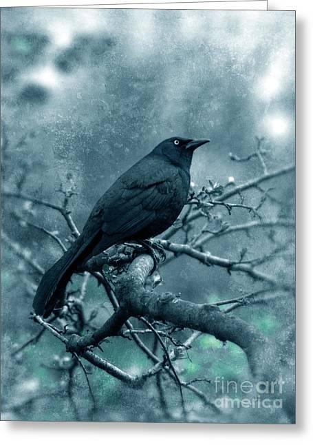 Black Bird On Branch Greeting Card by Jill Battaglia