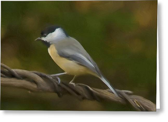 Lexington South Carolina Greeting Cards - Black-Capped Chickadee Greeting Card by Steven Richardson