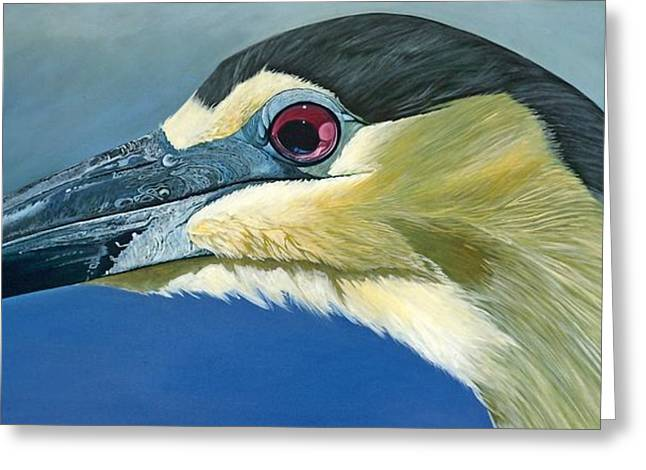 Grouper Print On Canvas Greeting Cards - Black Capped Night Heron Greeting Card by Jon Ferrentino