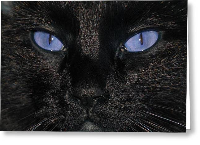 Cats Pyrography Greeting Cards - Black Cat Blue Eyes Greeting Card by Paul Ward