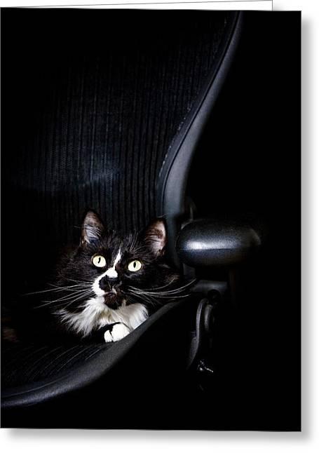 Felis Silvestris Catus Greeting Cards - Black Cat Greeting Card by David DuChemin