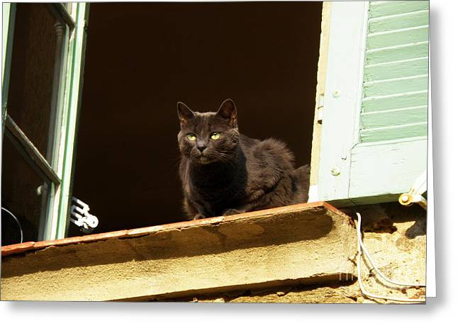 Lainie Wrightson Greeting Cards - Black Cat on the Window Ledge Greeting Card by Lainie Wrightson