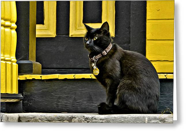 Amimal Greeting Cards - Black Cat Yellow Trim Greeting Card by Williams-Cairns Photography LLC