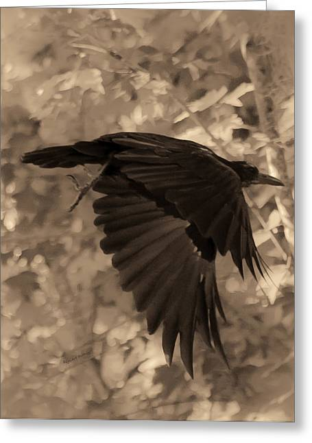American Crow Greeting Cards - Black Crow Greeting Card by DigiArt Diaries by Vicky B Fuller