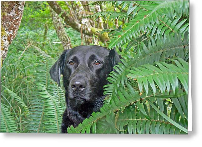 Pamela Patch Greeting Cards - Black Dog in the Ferns Greeting Card by Pamela Patch