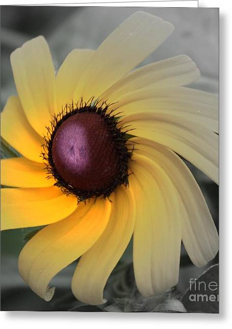 Abstract Digital Photographs Greeting Cards - Black Eyed Susan Abstract 2 Greeting Card by Marjorie Imbeau