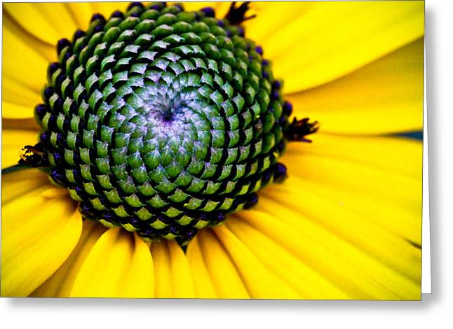 Macro Finalized Photographs Greeting Cards - Black Eyed Susan Goldsturm Flower Greeting Card by Ryan Kelly