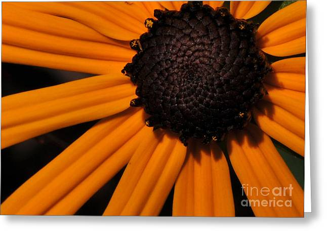 Wall Art For Your Home Greeting Cards - Black-eyed Susan Greeting Card by Paul Ward