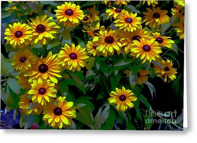 All Ford Day Greeting Cards - Black-Eyed Susans Greeting Card by Dale   Ford