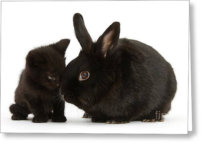 House Pet Greeting Cards - Black Kitten And Rabbit Greeting Card by Mark Taylor