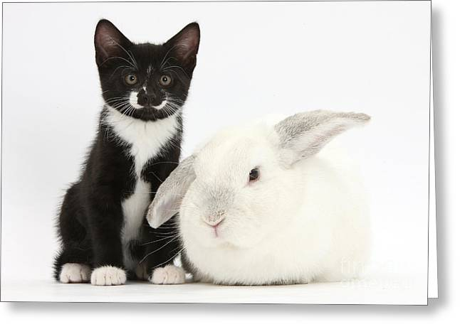 House Pet Greeting Cards - Black Kitten With White Rabbit Greeting Card by Mark Taylor