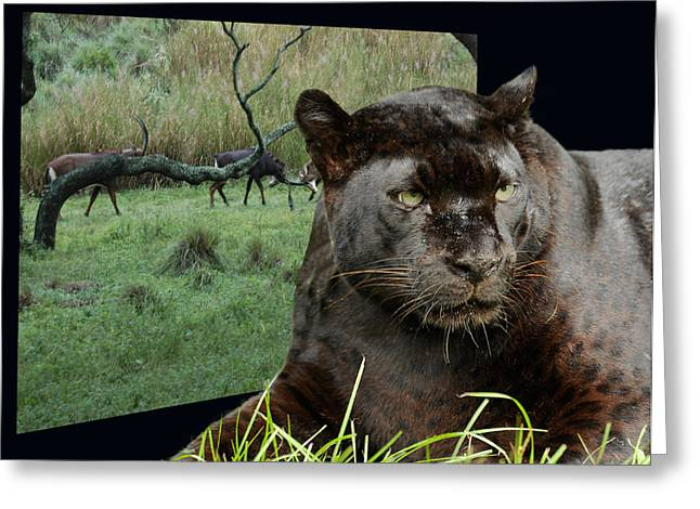 Oof Greeting Cards - Black Leopard Out Of Frame Greeting Card by Keith Lovejoy