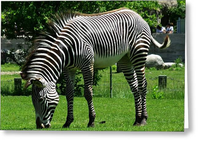 Zebra Greeting Cards Greeting Cards - Black N White Beauty Greeting Card by Dottie Gillespie