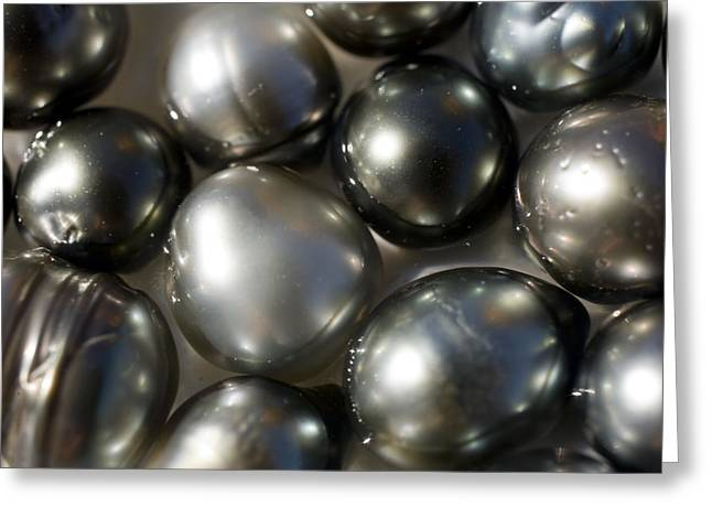 Valuable Greeting Cards - Black Pearls Displayed In A Pearl Greeting Card by Tim Laman