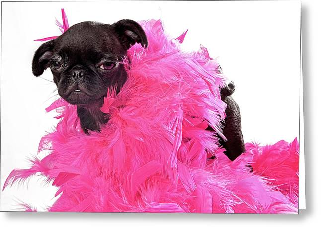 Dogs. Pugs Greeting Cards - Black Pug Puppy with Pink Boa Greeting Card by Susan  Schmitz
