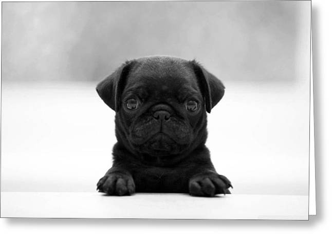 Monochromatic Greeting Cards - Black pug Greeting Card by Sumit Mehndiratta