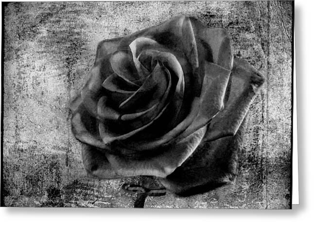Black Roses Greeting Cards - Black Rose Eternal  BW Greeting Card by David Dehner