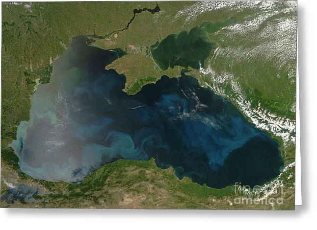 Black Sea Phytoplankton Greeting Card by NASA