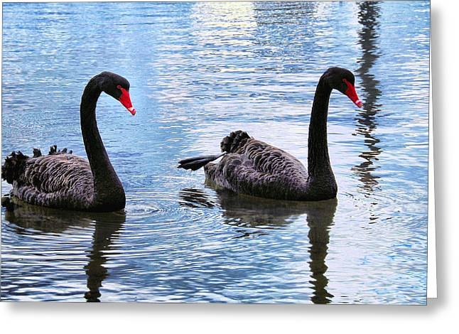 Meditate Pyrography Greeting Cards - Black swans Greeting Card by Imagevixen Photography