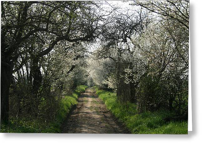 Czechia Greeting Cards - Black thorn alley Greeting Card by Michal Cerny