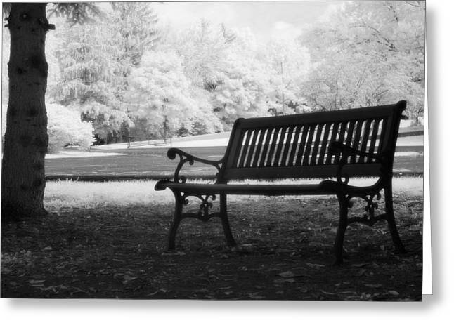 Fantasy Tree Photographs Greeting Cards - Charleston Black and White Infrared Charleston Battery Park Bench Greeting Card by Kathy Fornal