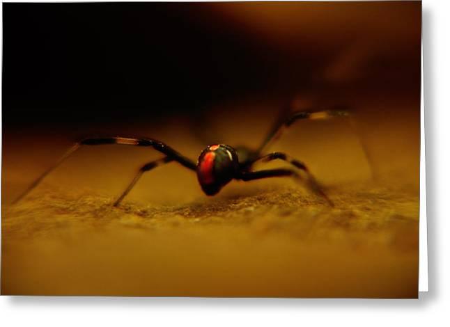 Black Widow Greeting Cards - Black Widow Greeting Card by Kris Napier