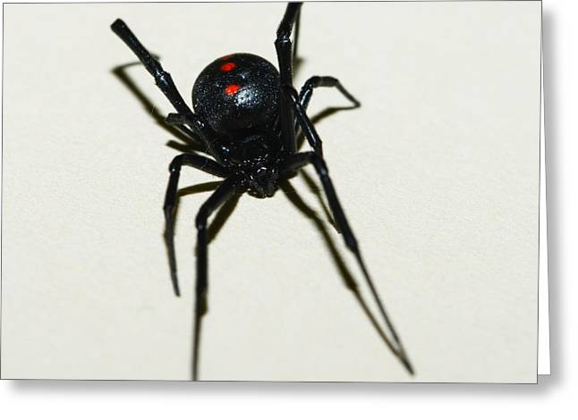 Black Widow Photographs Greeting Cards - Black Widow Polka Dots Greeting Card by David Waldo